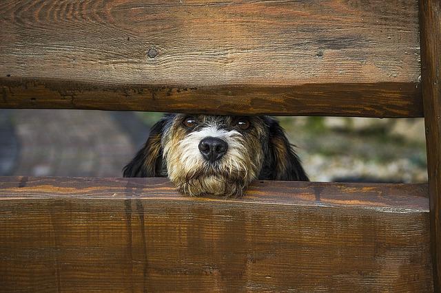 dog-1340327_640
